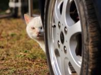 見た目はかわいい猫ちゃんですが…
